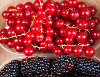 redcurrants Fotos de Stock