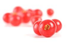 redcurrants Fotografia Stock