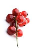 Redcurrants Stock Photo