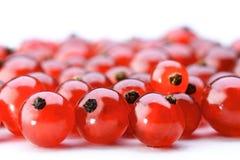 Redcurrants Stock Image