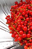 Redcurrants. Abstract background, redcurrants close-up Stock Images