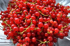 Redcurrants. Abstract background, redcurrants close-up Royalty Free Stock Images