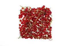 Redcurrants against white background. Redcurrants shaped in a square against white background Royalty Free Stock Photos