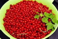 Redcurrants on black slate food photo Stock Photography