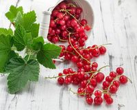 Redcurrants in bucket over white wooden background Royalty Free Stock Images