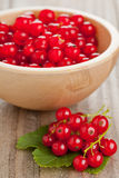 Redcurrants Stock Image