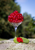 Redcurrants in a glass Royalty Free Stock Photography