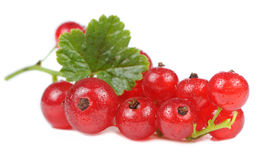 Redcurrants Isolated on White Background Stock Photography