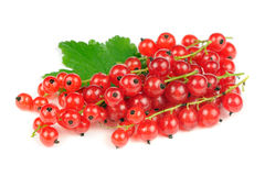 Redcurrants Isolated on White Background Stock Photos