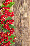Redcurrants and leaves Royalty Free Stock Photography
