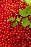 Redcurrants na czerń łupku jedzenia fotografii Obrazy Stock