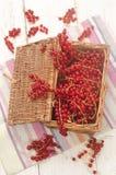 Redcurrants recién cosechados en una cesta fotos de archivo