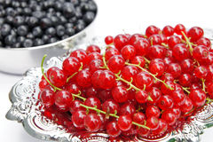 Redcurrants on a silver platter Stock Photography