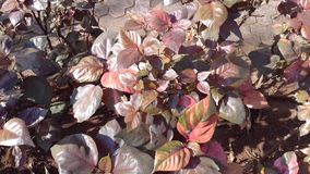 Reddish brown leaves Royalty Free Stock Image