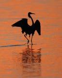 Reddish Egret Silhoeutte At Sunset- Sanibel Island Stock Photo