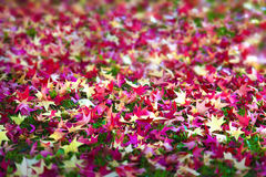 Reddish fall leaves. Beautiful reddish fall leaves on green grass with focus in the middle of blurred Royalty Free Stock Photography