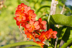 Reddish or orange orchids. Flowers in gardens ,beautiful trees Stock Images