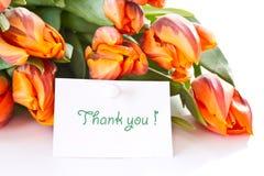 Reddish orange tulips Stock Photo