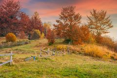 Reddish sunrise in autumn countryside. Lovely rural scenery with wooden fence around the orchard on the hill. trees in red foliage royalty free stock images