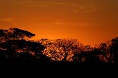 Reddish sunset. Beautiful reddish sunset forming silhouette of trees Royalty Free Stock Photo