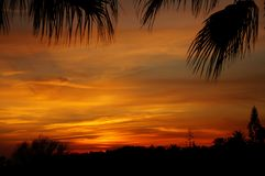 Reddish sunset sky with black silhouettes of tropical plants. Black silhouettes of palm leaves at the top and other tropical plants in the background at the royalty free stock photo