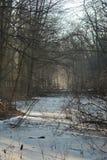 Reddition d'hiver Image libre de droits