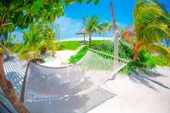 Rede acolhedor romântica sob a palmeira do coco no paraíso tropical no dia de verão ensolarado brilhante imagem de stock