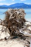 Rede av havet Eagle på stranden arkivbild