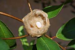 Rede av kolibrin med ett ägg royaltyfri fotografi