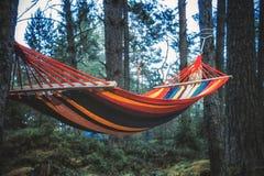 Rede colorida que pendura no foco seletivo da floresta Fotografia de Stock