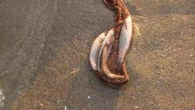 Rede com os peixes na areia video estoque