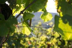 Rede da aranha Fotografia de Stock