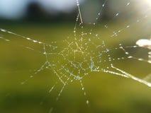 Rede da aranha no dia chuvoso Fotografia de Stock