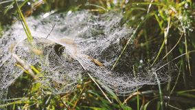 A rede da aranha no macro com muitas gotas video estoque