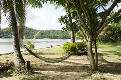 Rede da mobília que pendura entre palmeiras no jardim do recurso fotografia de stock