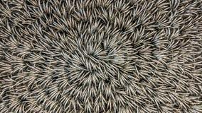 Rede de arame rolada acima da vista fotografia de stock royalty free