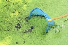 Rede de mergulho com a lentilha-d'água no rio Foto de Stock Royalty Free