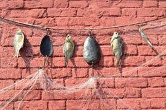 Rede de pesca, ganchos de pesca e peixes secados Fotos de Stock Royalty Free