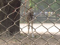 Rede do jardim zoológico Foto de Stock Royalty Free