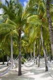 Rede do paraíso da praia sob a palma Fotos de Stock