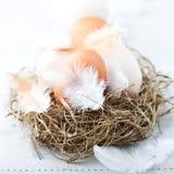 rede för easter äggfjädrar Fotografering för Bildbyråer