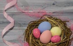 Rede för fågel` s med easter ägg Arkivfoton