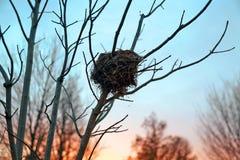 Rede för fågel` s på solnedgången i vintern Royaltyfri Foto