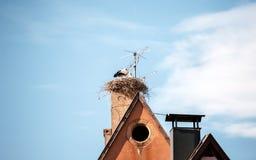 Rede för storkciconiaciconia på ett hus Fotografering för Bildbyråer