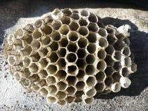 Rede geting, vespula, getingar, honungskaka, vespiary, plåga, natur, closeup, guling, papper, djur, hem som är löst, djurliv, far royaltyfri fotografi