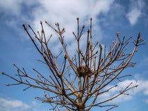 Rede i träd Arkivbilder