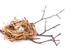 Rede med ägg på en filial Royaltyfri Bild