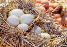 Rede med fega ägg royaltyfri foto