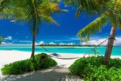 Rede vazia entre palmeiras na praia tropical Imagens de Stock