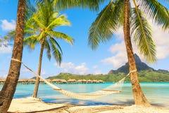 Rede vazia entre palmeiras na praia tropical Foto de Stock